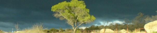 cropped-will-new-camera-12-2008-167.jpg